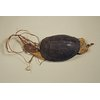 Tortoise Shell Charm